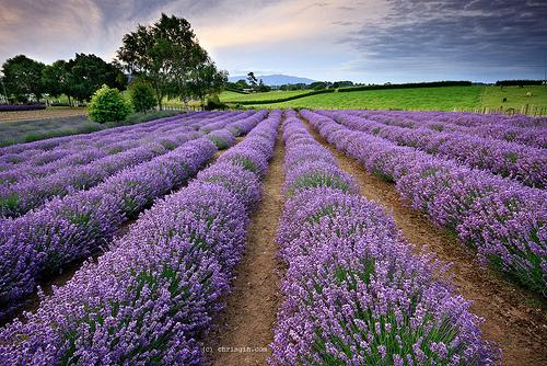 Wexford Lavender Farm Header
